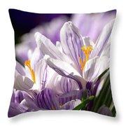 Springtime Color Throw Pillow