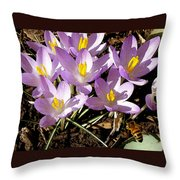 Springtime Crocuses  Throw Pillow