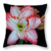 Springtime Florida Amaryllis Throw Pillow
