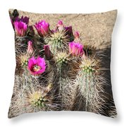 Springtime In The Desert Throw Pillow