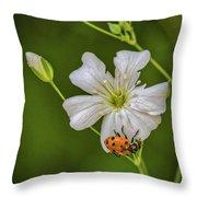 Springtime Ladybug Throw Pillow