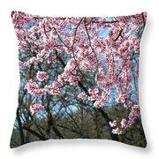Springtime Seasonal Pink Blossom Flowers Baslee Throw Pillow