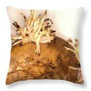 Sprouting Potato Throw Pillow