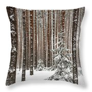Spruce Among The Pines Throw Pillow