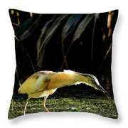 Squacco Heron On The Look Out For Fish Throw Pillow