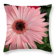 Square Framed Pink Daisy Throw Pillow