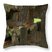 Squatting Squirrel Throw Pillow