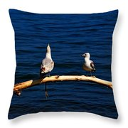 Squawk Box Throw Pillow by Amanda Struz