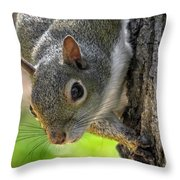 Squirrel 4 Throw Pillow
