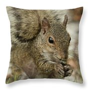 Squirrel And Nuts Throw Pillow