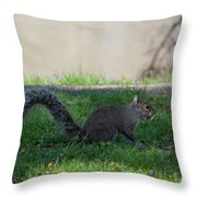 Squirrel At A Stand Still Throw Pillow