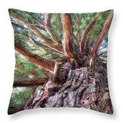 Squirrel Haven Throw Pillow