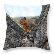 Squirrel In Cottonwood Tree Throw Pillow