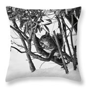 Squirrel In Low Branches Throw Pillow