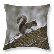 Squirrel In The Snow Throw Pillow