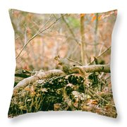 Squirrel In The Woods  Throw Pillow