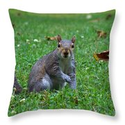 Squirrel Iv Throw Pillow