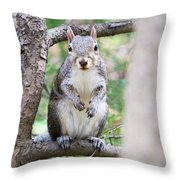 Squirrel Looking At Photographer And Waiting To Be Fed Throw Pillow