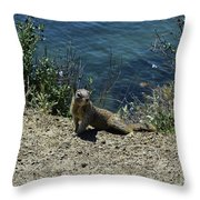 Squirrel Looking Back Over His Shoulder On The Coast Throw Pillow