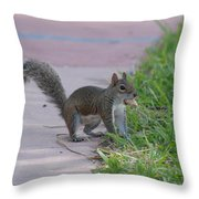 Squirrel Nuts Throw Pillow