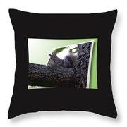 Squirrel On A Limb Throw Pillow