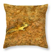 Squirrel On The Ground Throw Pillow