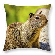 Squirrel On The Rock Throw Pillow