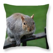 Squirrel Watching Throw Pillow