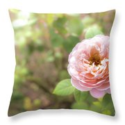 St. Cecilia Shrub Rose, Pink Rose Originally Produced By The Br Throw Pillow