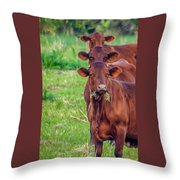 Stacked Up Cows          Throw Pillow