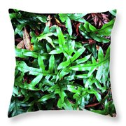 Staghorn Fern With Dead Leaves Throw Pillow