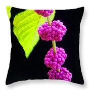 Stalk Of Seeds Throw Pillow