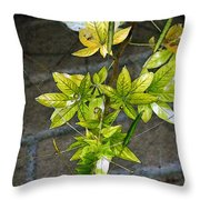 Stalk With Seed Pods Throw Pillow