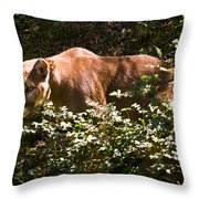 Stalking Big Cat Throw Pillow