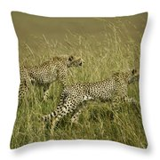 Stalking Cheetahs Throw Pillow