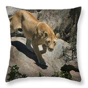 Stalking Humans Throw Pillow