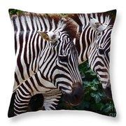 Stallions Throw Pillow