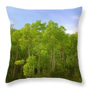 Stand Of Quaking Aspen Trees Throw Pillow
