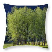 Stand Of Trees Yosemite Valley Throw Pillow