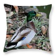 Mallard On Watch Throw Pillow