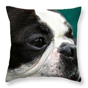 Stanley's Head Study Throw Pillow