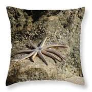 Star Fish On The Rock Throw Pillow