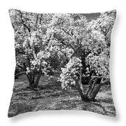 Star Magnolia Trees Throw Pillow