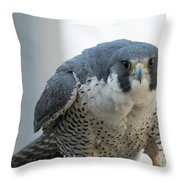 Stare Down Throw Pillow