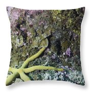 Starfish On A Coral Reef Throw Pillow