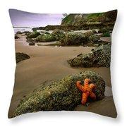 Starfish On The Rocks Throw Pillow