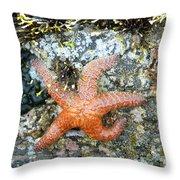 Starfish Running Throw Pillow