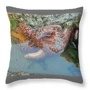 Starfish Sandwhich Throw Pillow