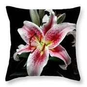 Stargazer On Black 11x14 Throw Pillow