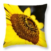 Staring At The Sun 2 Throw Pillow